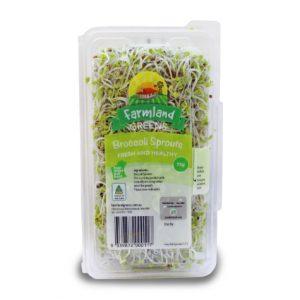 broccoli sprouts farmland greens